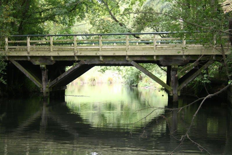 Native Black Beech Bridge Beams || Hagley Park Christchurch